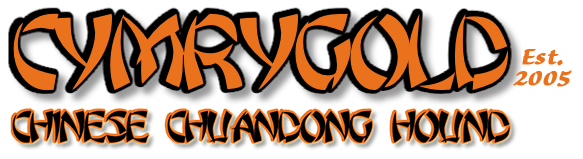 Cymrygold Chinese Chuandong Hound